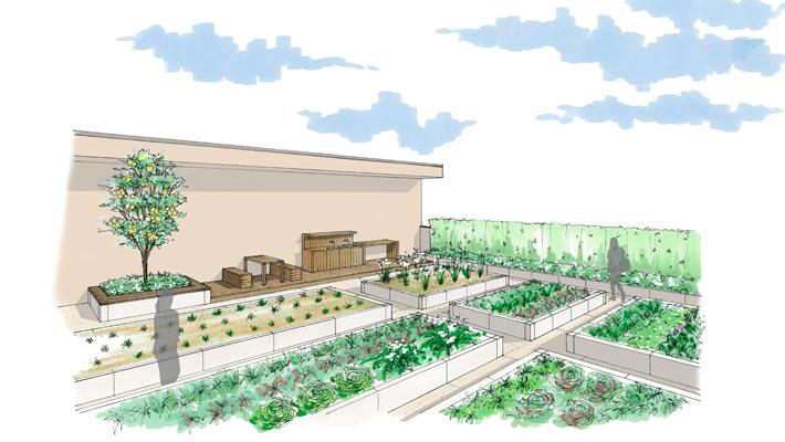 屋上菜園1