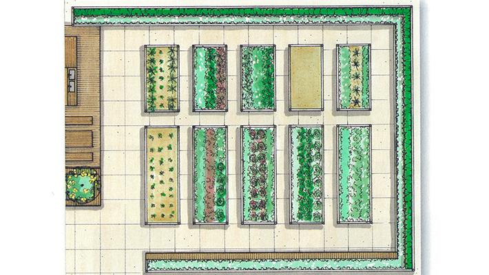屋上菜園2