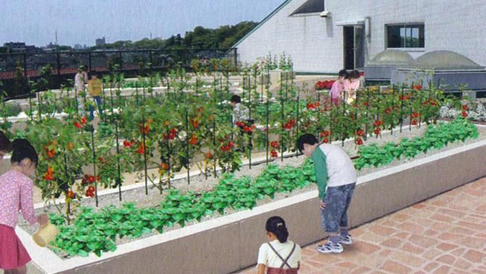 屋上菜園3